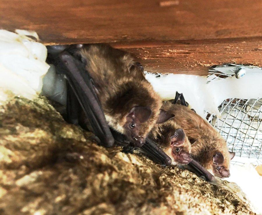 Bat Warning Notice For Ontario