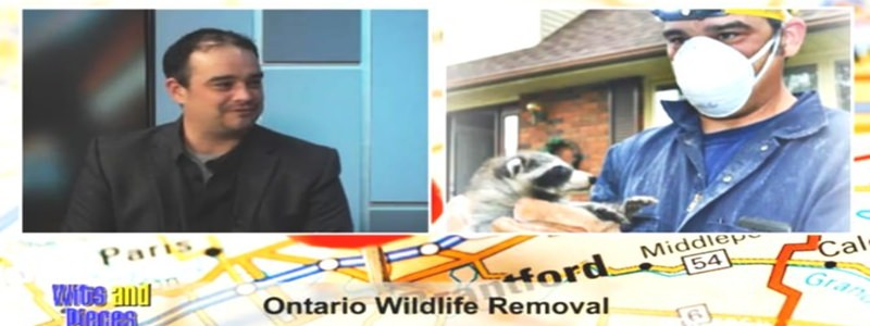 Jared Houliston Answering Wildlife Removal Questions