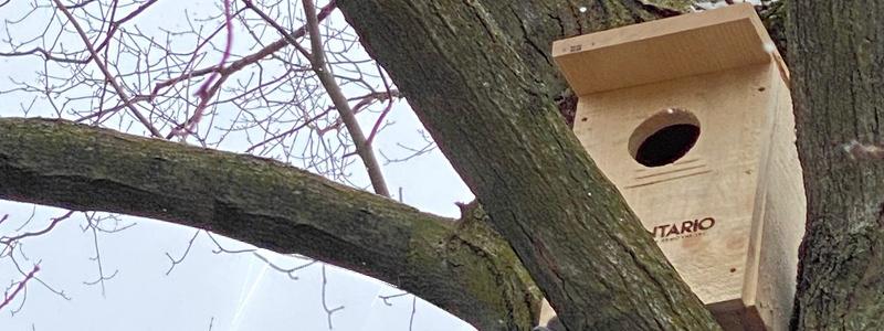 Owl box in tree